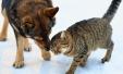 '개와 고양이' 누가 더 나를 사랑할까?