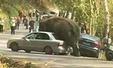 실연한 코끼리, 자동차에 화풀이