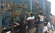 [중국] 도살장 끌려가던 개 200마리 구조