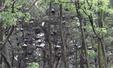 청주 서원대 주변 점령한 백로떼