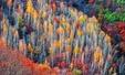 국내 최대 자작나무숲이 '힐링 마을'로