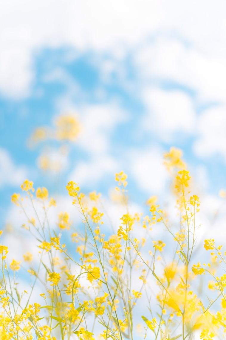인생의 봄바람이 불면 하게 되는 첫사랑 - 봄에는 ...