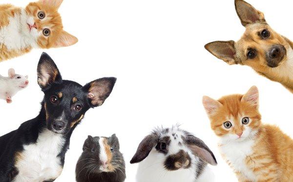 동물권 - '케어' 박소연 대표 관련 기사를 보며..