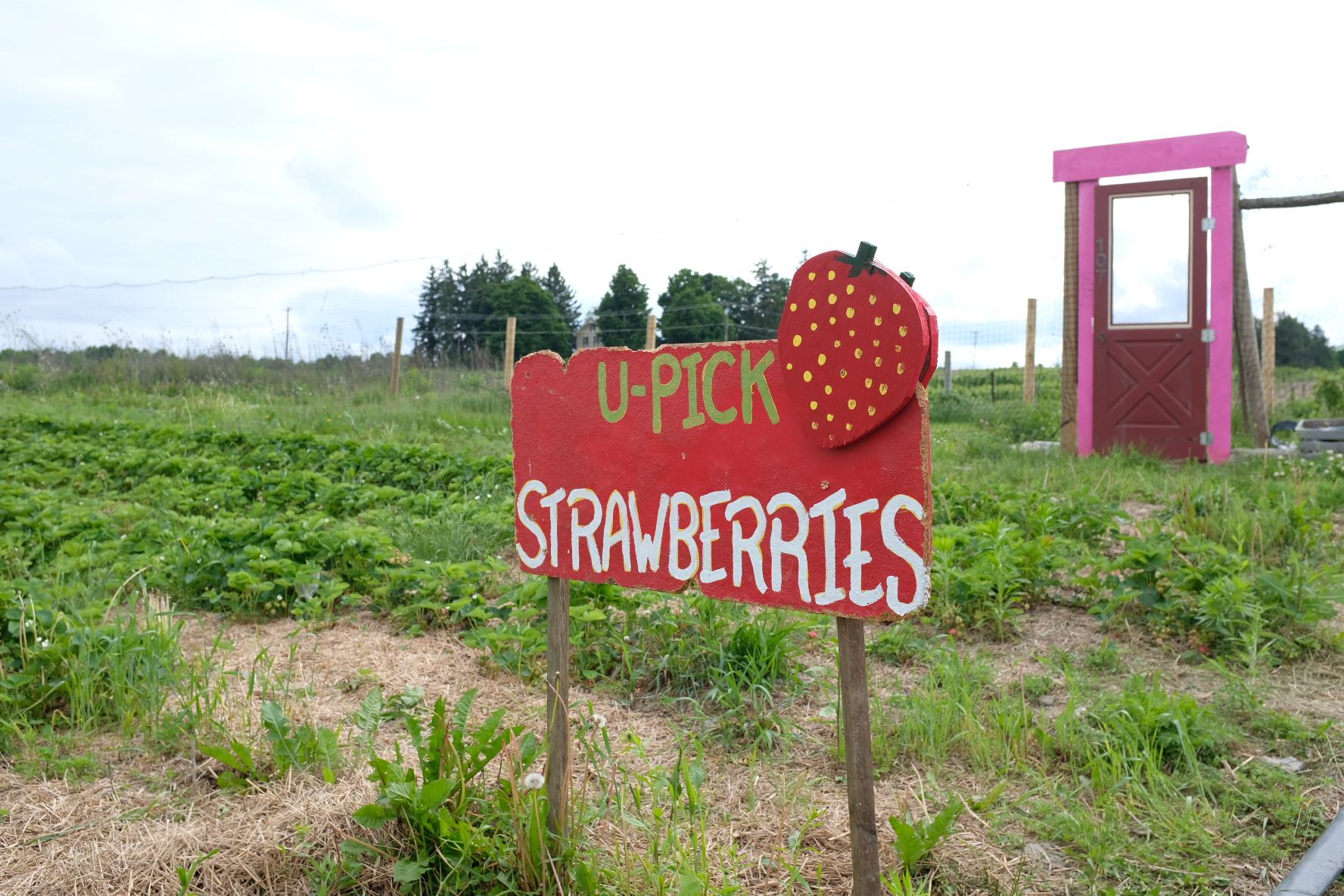 소소하지만 확실한 행복, 딸기 피킹