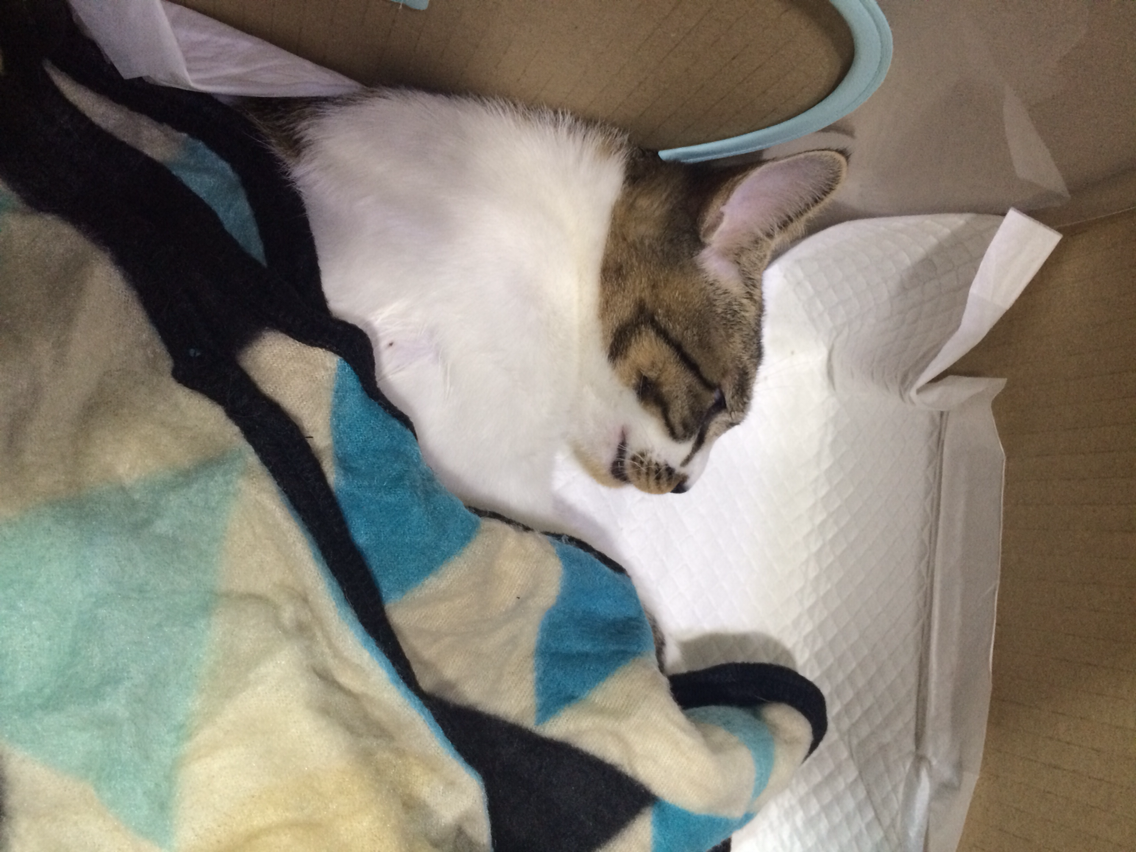 잔인한 인간 - 고양이 정관수술 이야기