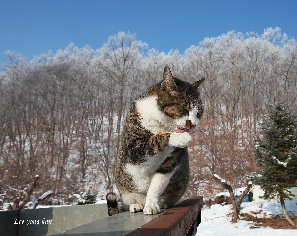 상고대 그리고 고양이