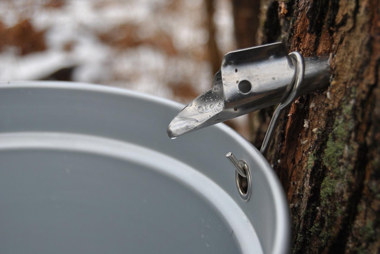 고로쇠 물과 메이플 시럽