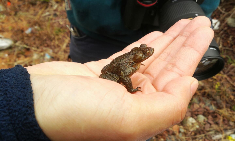 물속에서 사는 물두꺼비 - 나의 첫 양서류 탐사