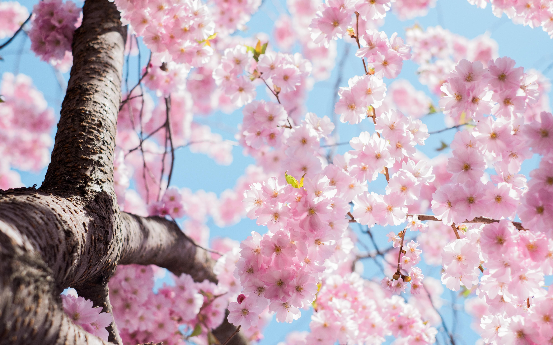 자연을 노래하다~봄의 칸타빌레_박재홍 선생님