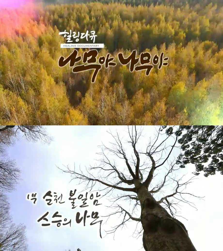 #24 설특집 '나무야 나무야' 시즌3