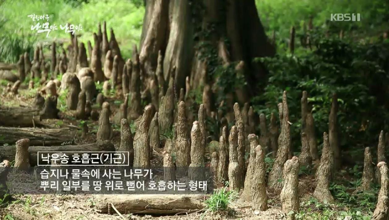 #3 '나무야 나무야' 시즌 4