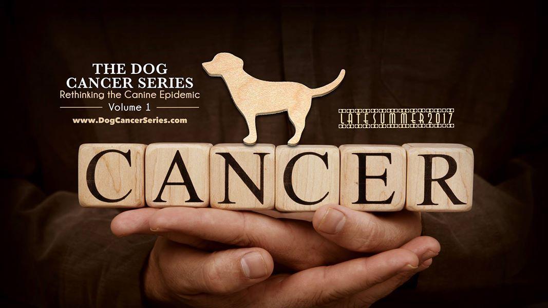 4-2 개 암의 위기 - canine cancer crisis