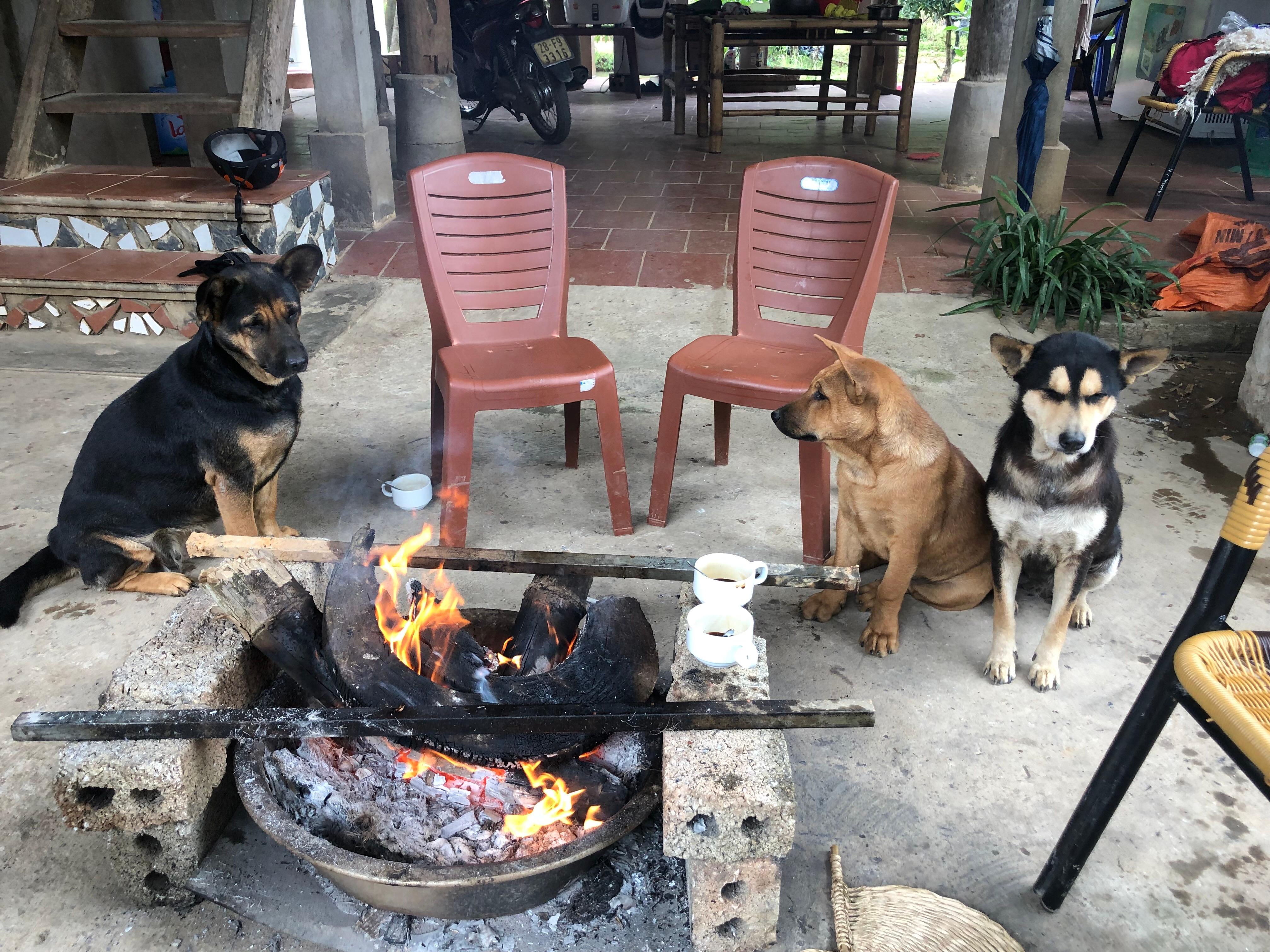 나는 세상에서 개가 가장 무섭다 - 베트남 한 달 ...
