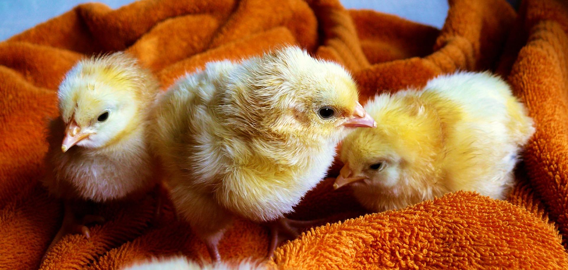 사람도 동물도 독감으로 아픈 새해 - 인간의 욕심,...