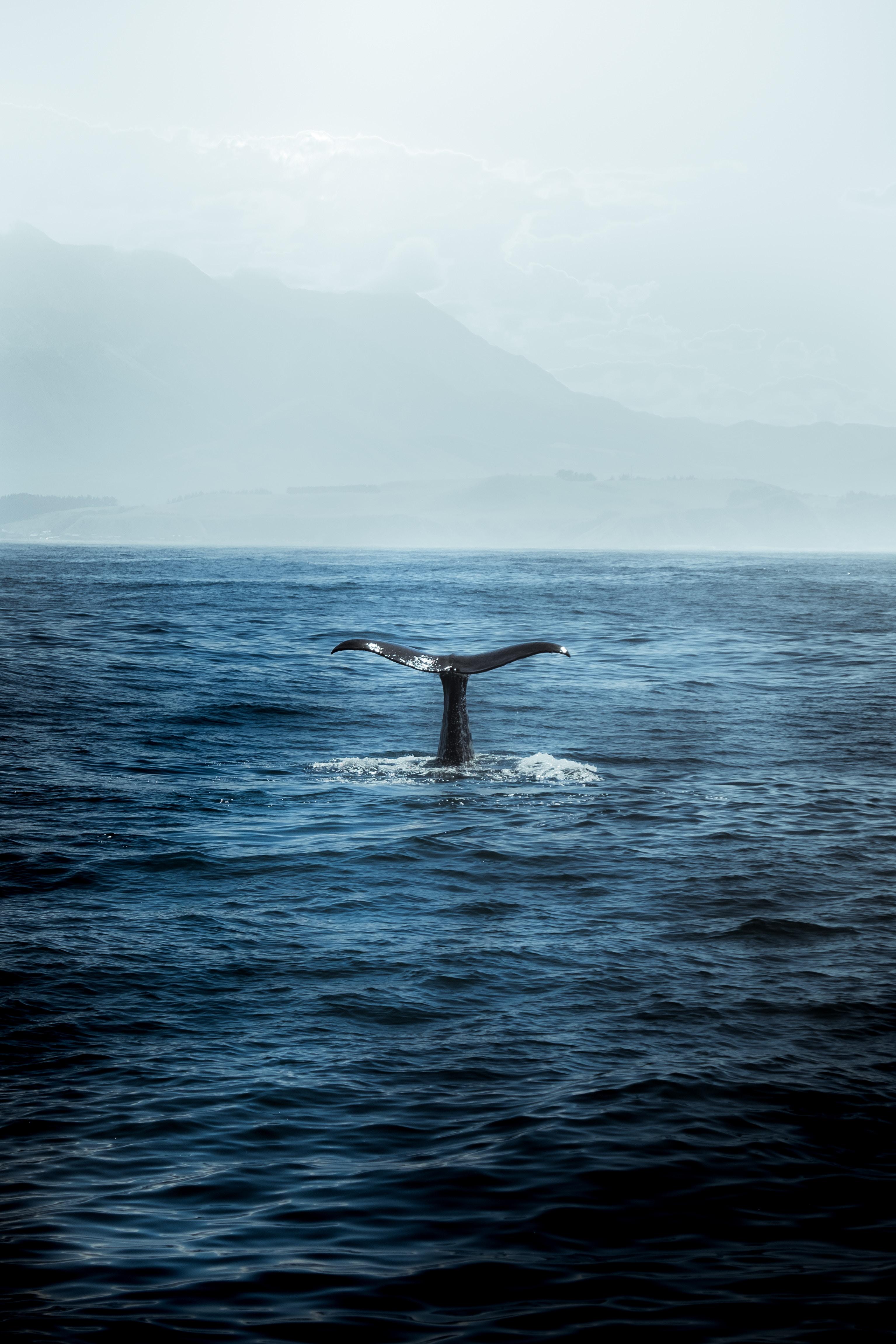 무쓸모의 쓸모 - 제니 데스몬드, <흰긴수염고래>