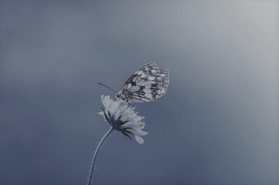 자존심을 세우는 흑기사의 나비효과 - 첫 번째 쉼...