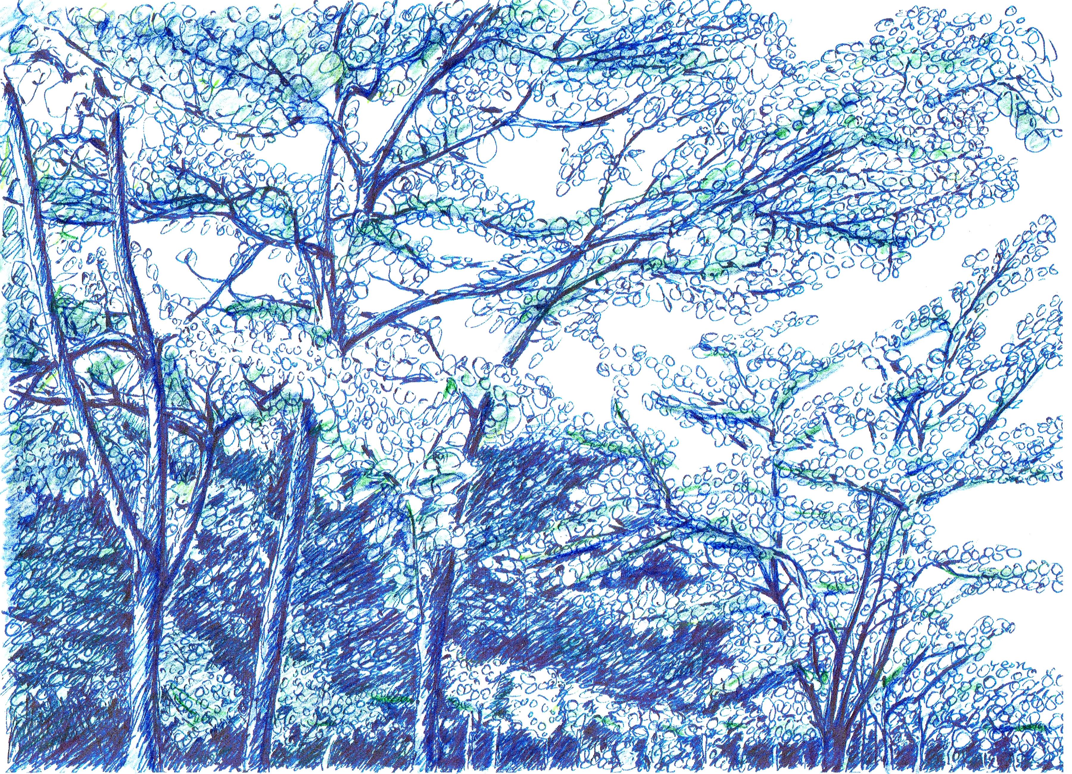 이팝나무 가로수 아래에서 - 계룡시 이팝나무 가로수