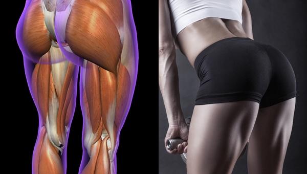 햄스트링 근육을 만들면 벌어지는 우리 몸의 놀라...