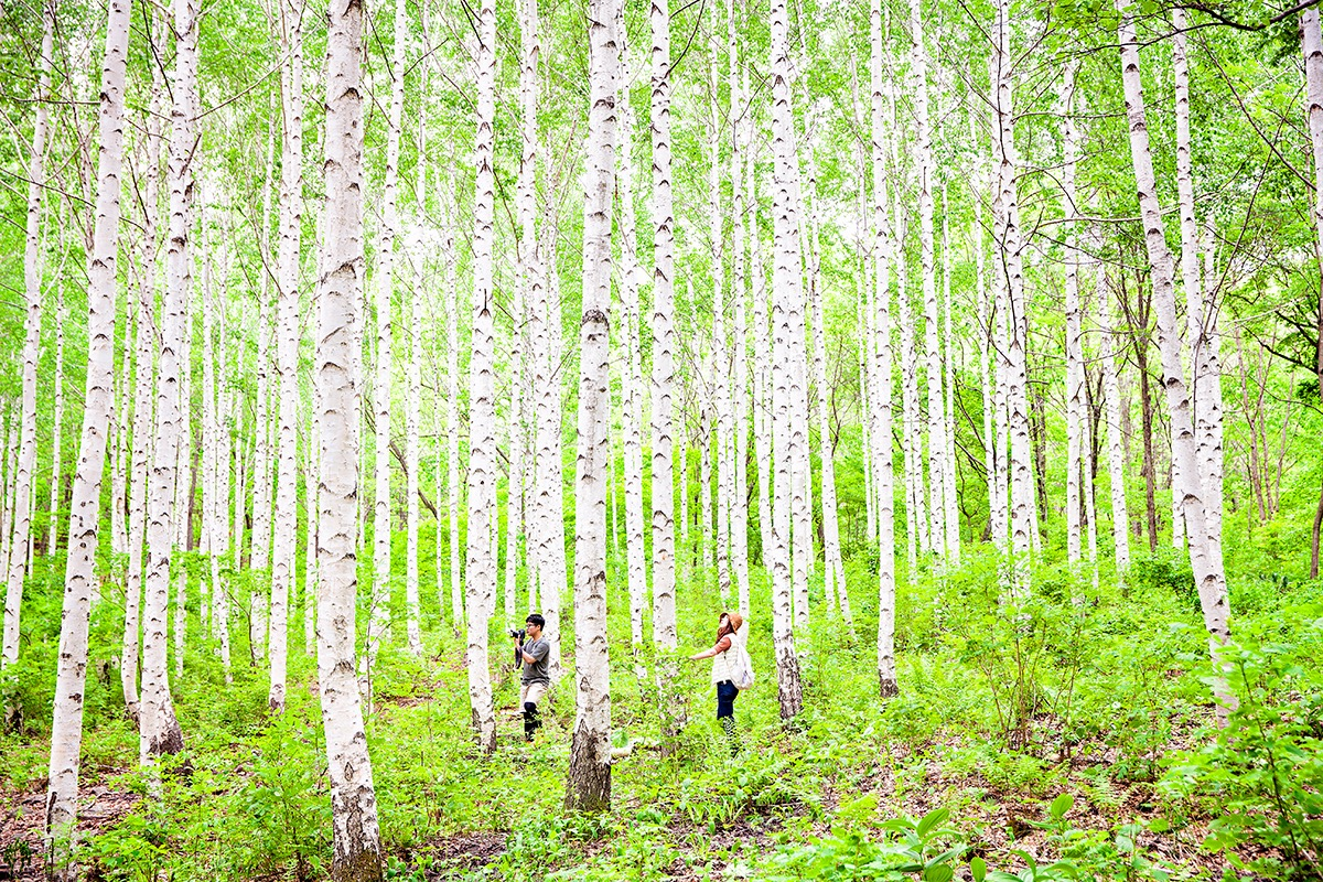 원대리 자작나무 숲의 봄과 겨울 풍경 - 션표의 두...