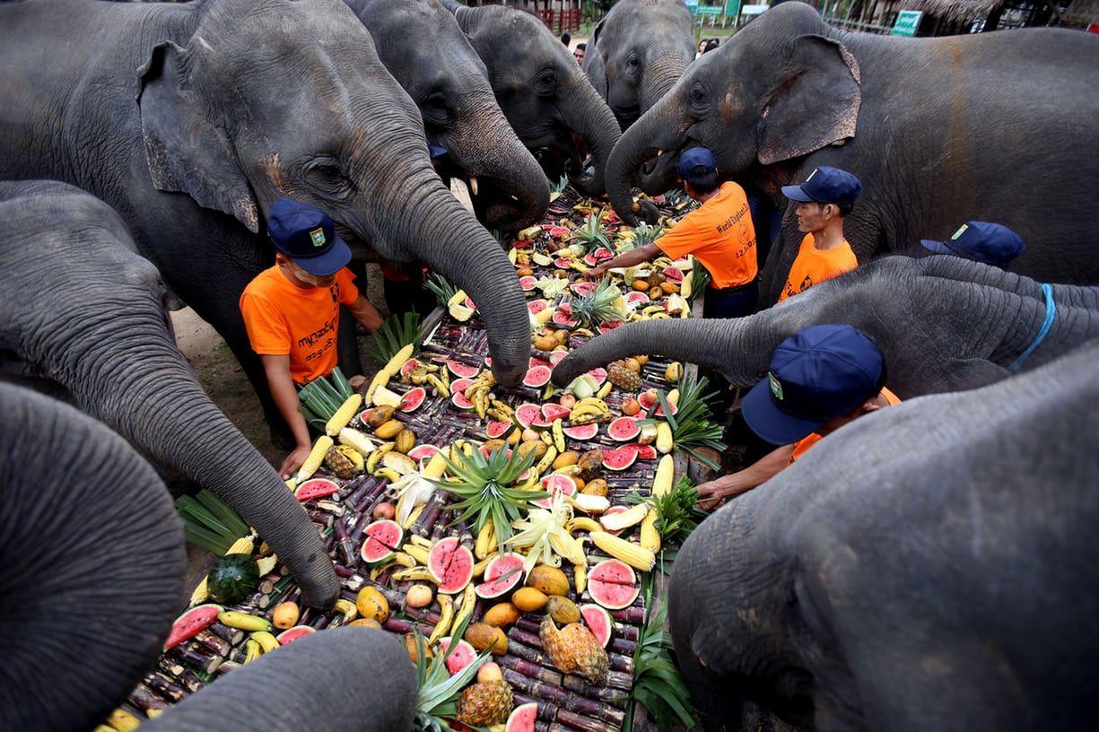 과일과 채소, 코끼리만큼 마음껏 먹어도 건강할까?...