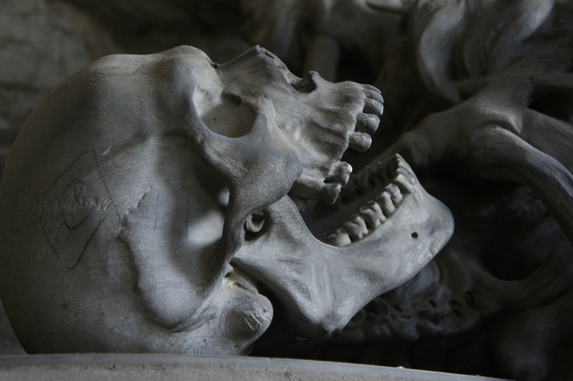 생명의 기억을 전하는 뼈, 100만 년을 살아남다. -...