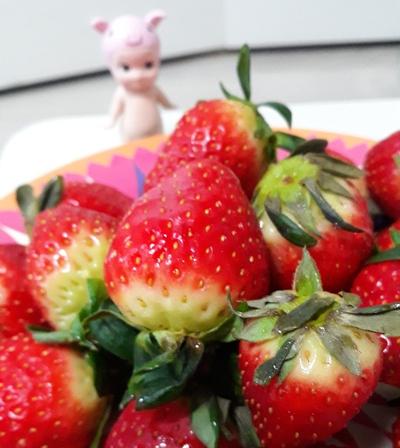 딸기 판세를 뒤집다! 국산 품종 '설향'의 위엄