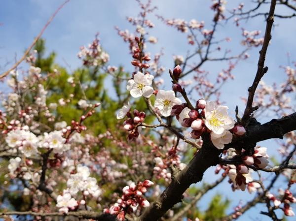 3월에 가기 좋은 여행지-광양. 김해. 구례. 양산.