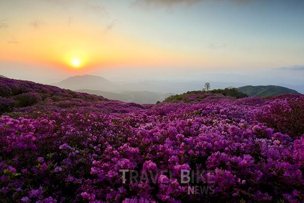 [합천여행] 진분홍빛 비단이불, 황매산에 봄이 왔...