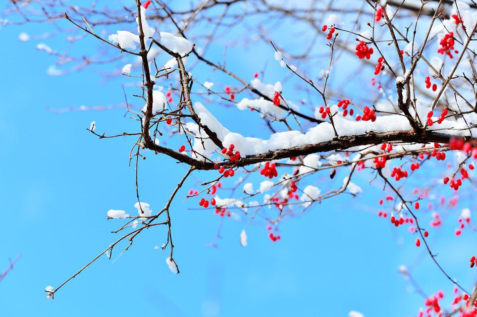 그해 따뜻한 겨울1 - -겨울 시 산책