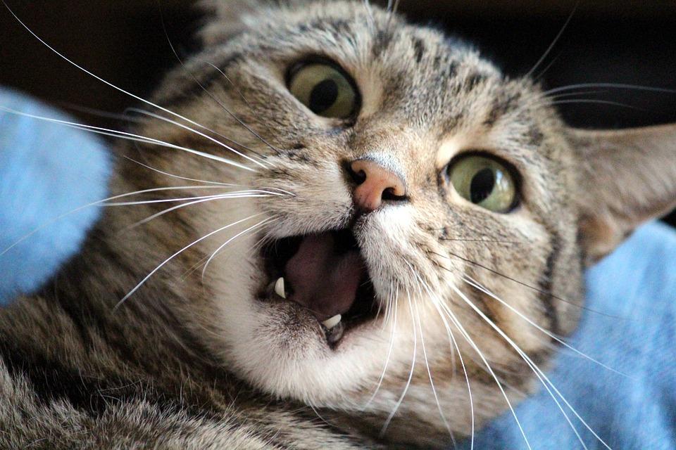 천둥번개에 놀라는 고양이 달래주는 법