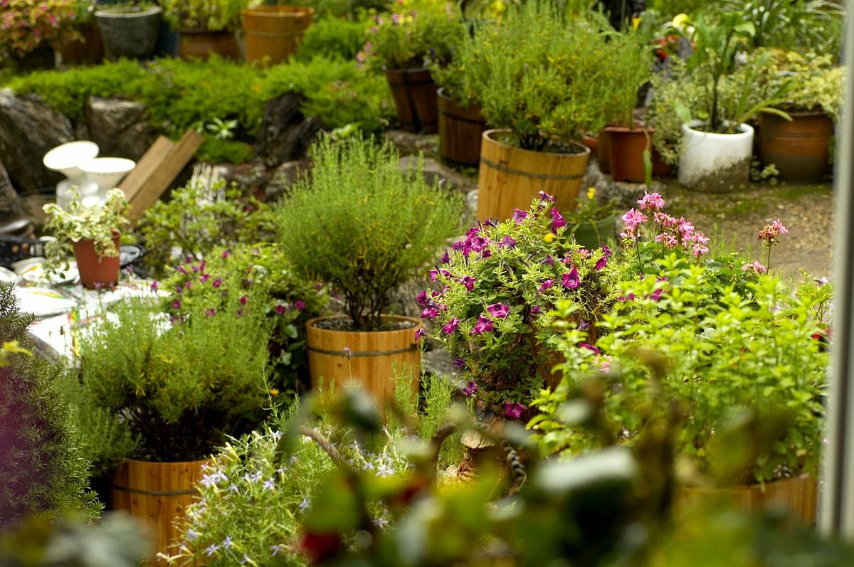 봄나들이, 미세먼지가 걱정되신다면식물원 어떠신...