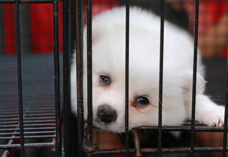 애완동물 상점에서 반려견 분양 금지시킨 영국