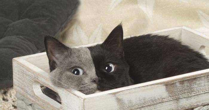 투페이스 고양이는 오늘도 자란다 - 세상에서 가장...
