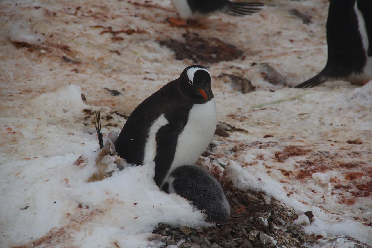남극의 블리자드 - 1. 세종기지편