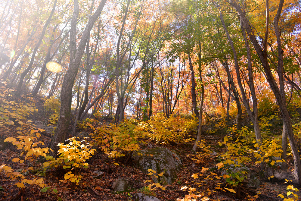 노란 생강나무 숲길을 타박타박, 김천 인현왕후길