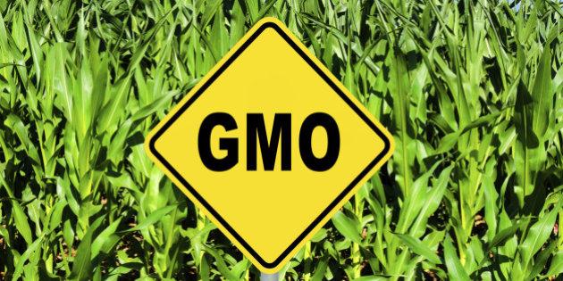 D+18 유전자 변형 농산물(GMO)에 대해서