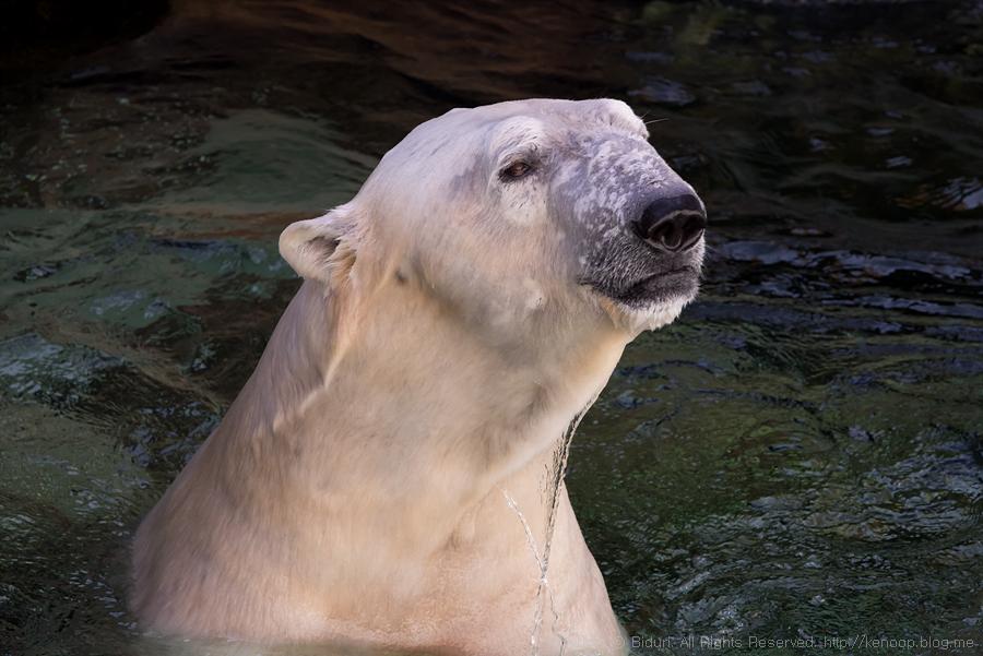 북극곰 '통키'를 아셨나요?