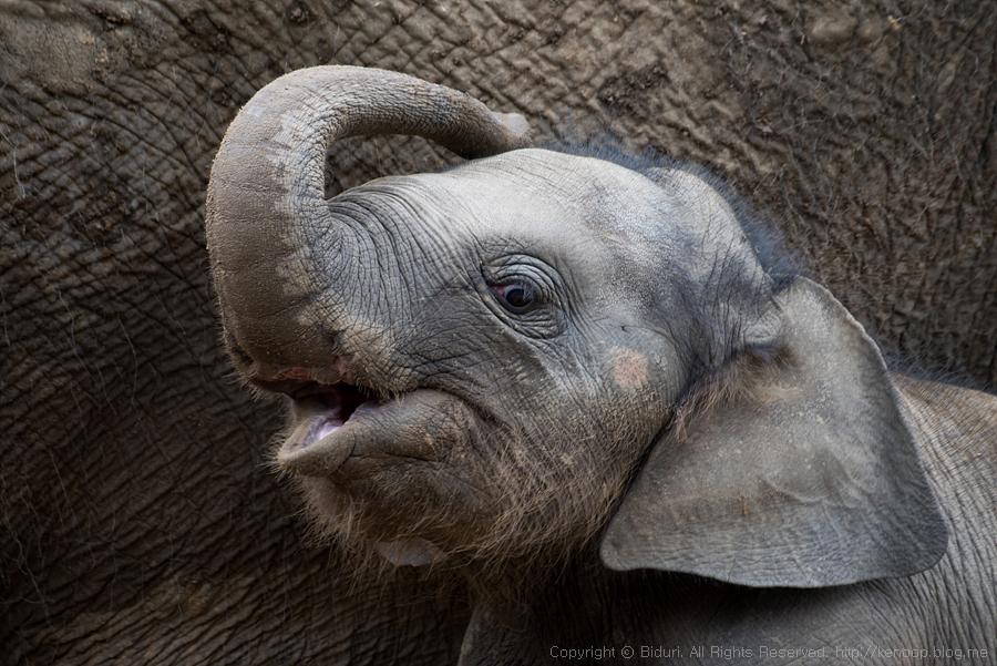 아기 코끼리 '코리'를 아시나요? - 20 - 사연 있...