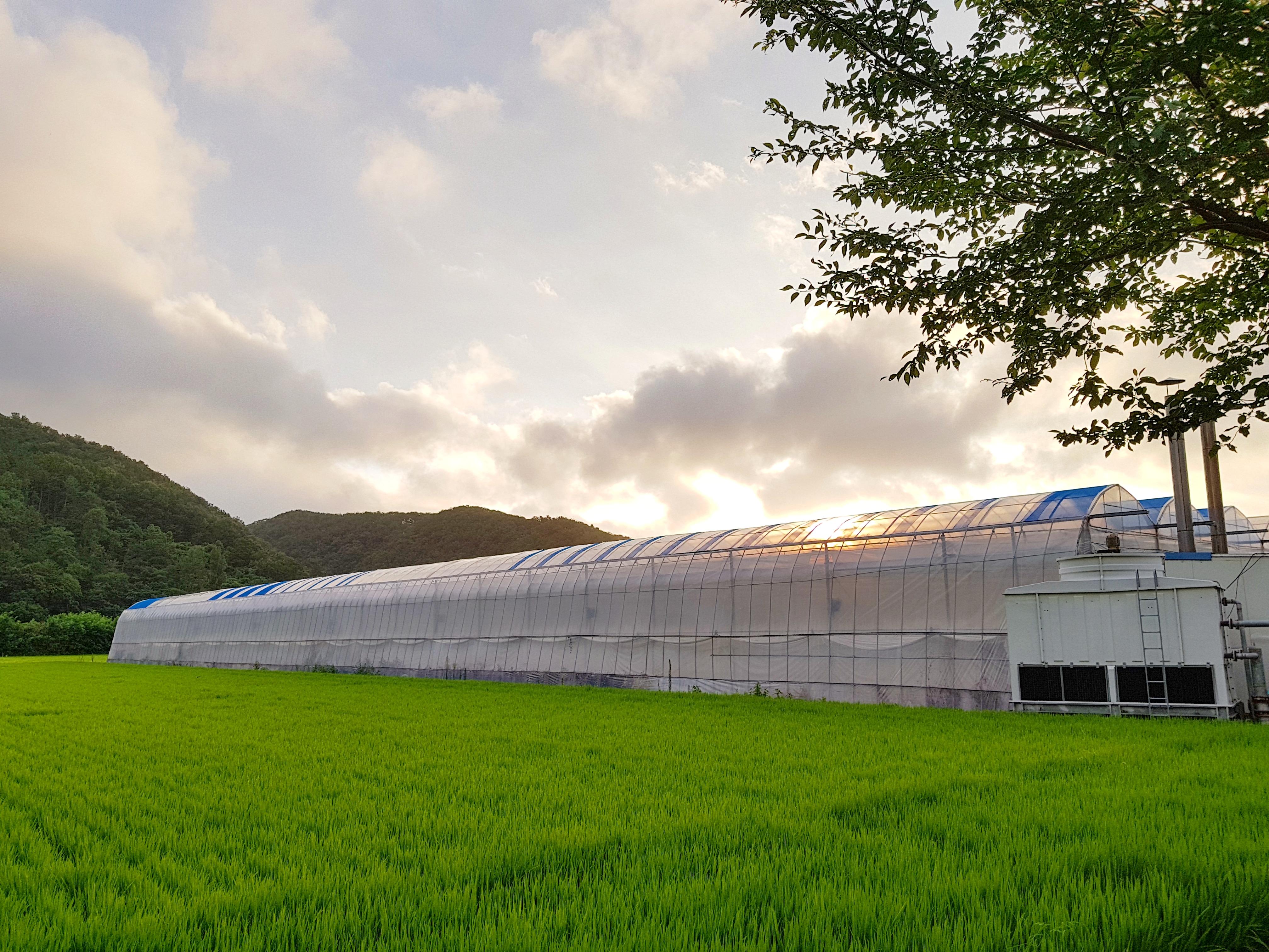 농산물은 공산품이 아니니까 - 농산물 외모지상주의