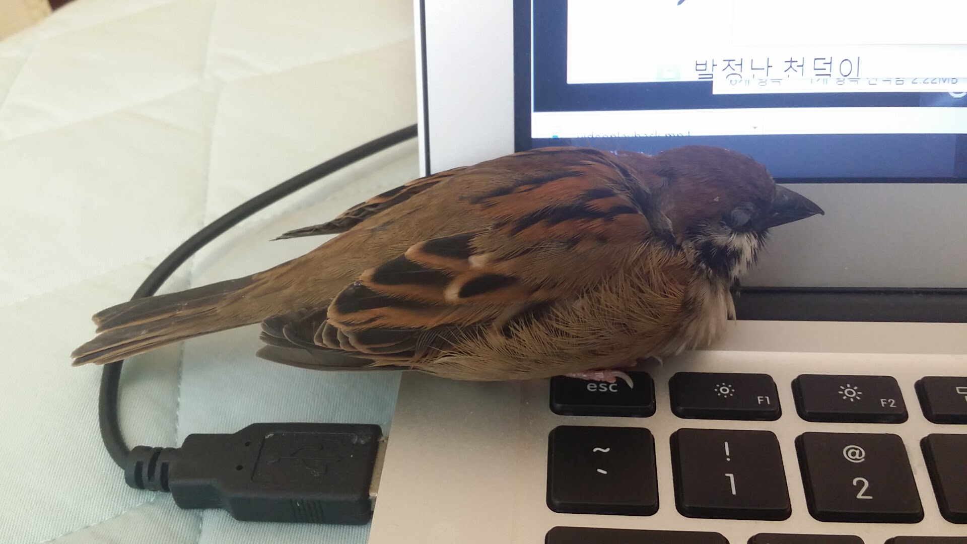 노트북의 탈취 - 나는 참새에게 침공당했다