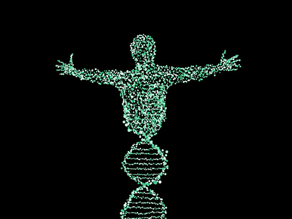 '유전자 가위'로 포유류 유전 조절 - 동물 이용...