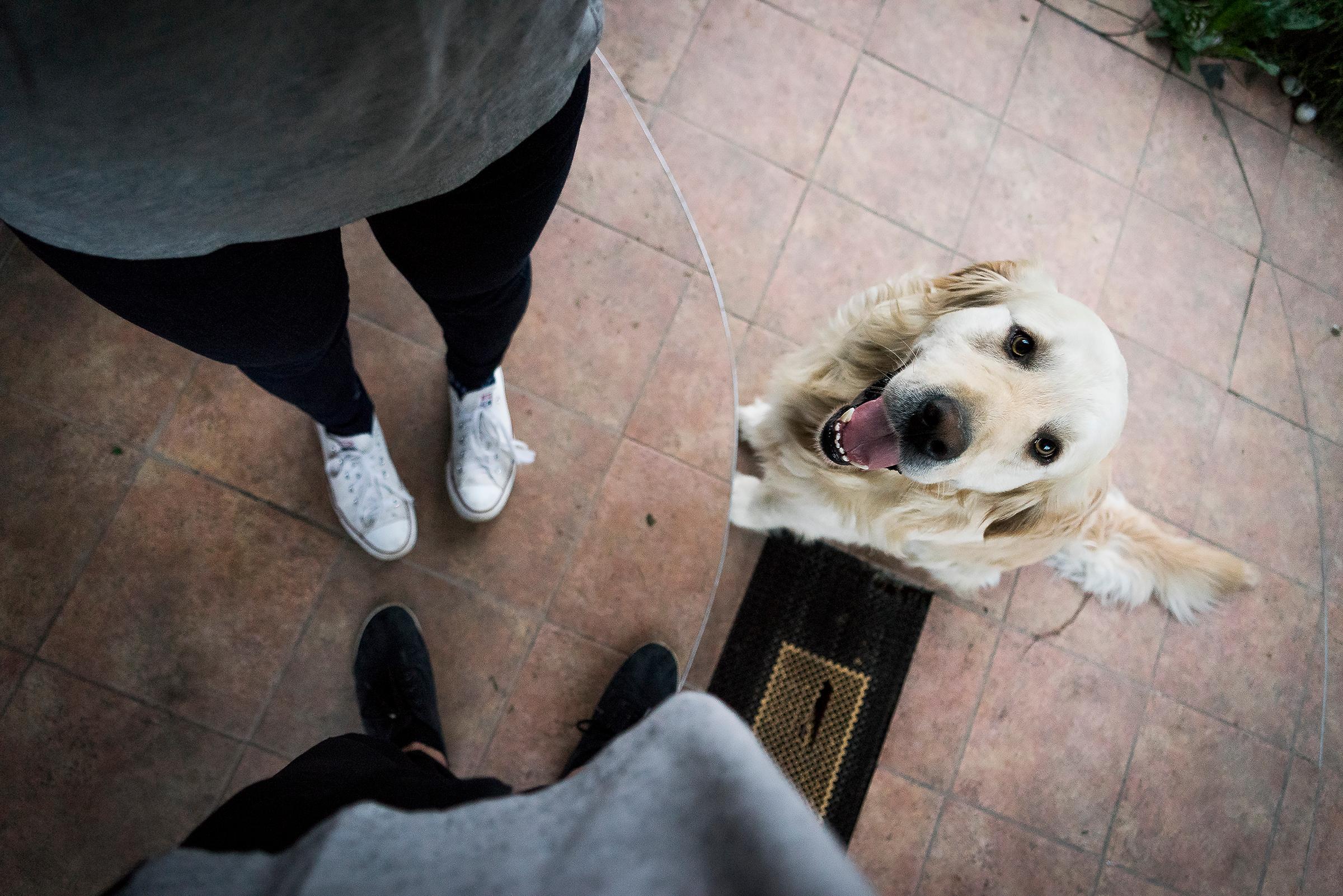 # Prologue - 개 좋아하세요? - 개를 좋아한다고 ...