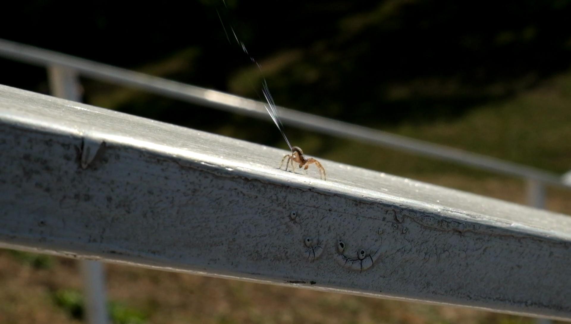날개도 없는 거미가 수백km를 비행하는 방법 - 거...