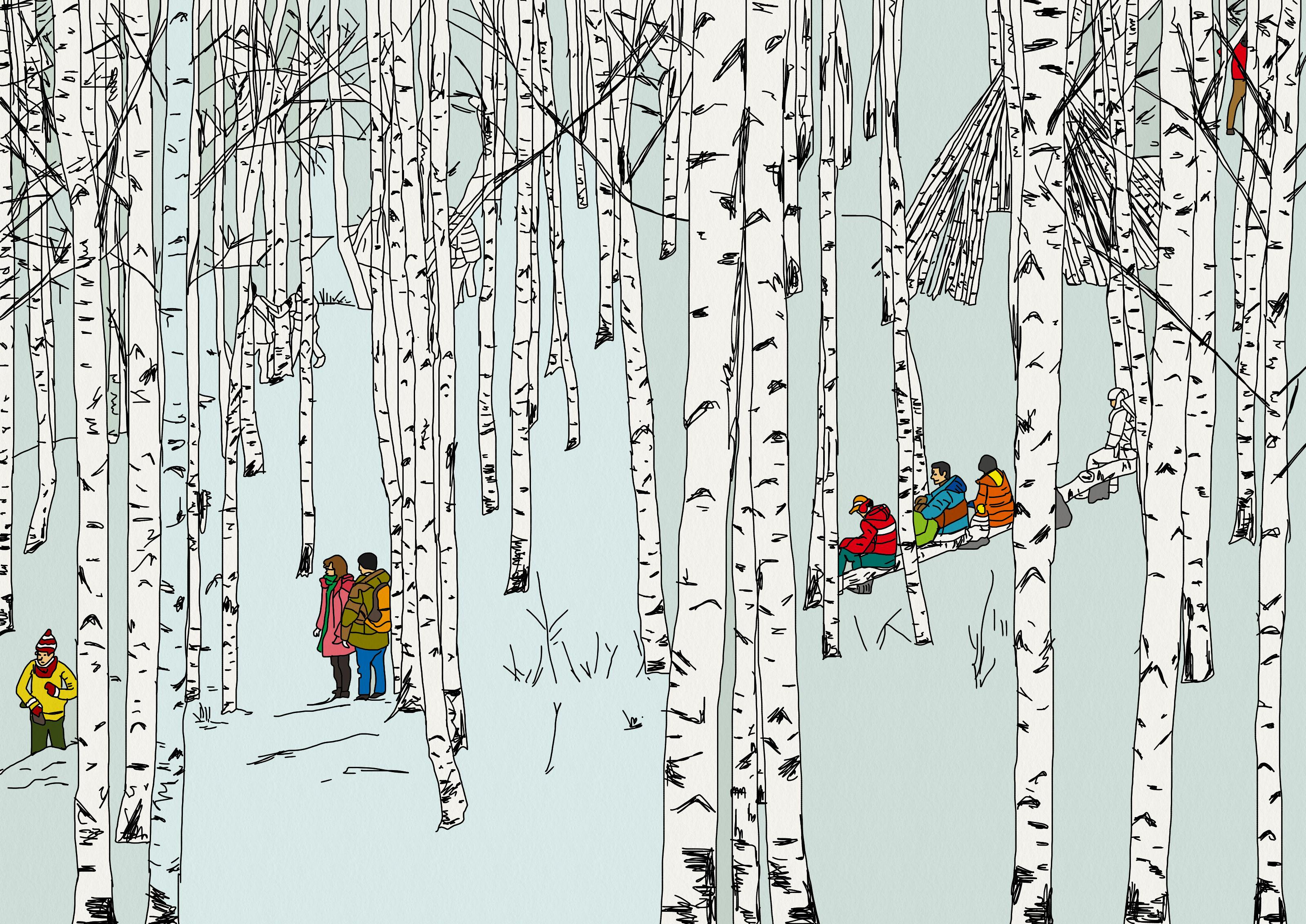 자작나무숲-하늘과 땅, 나무가 모두 하나의 색