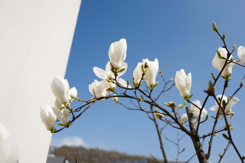 사월 정원 -허수경과 한병철