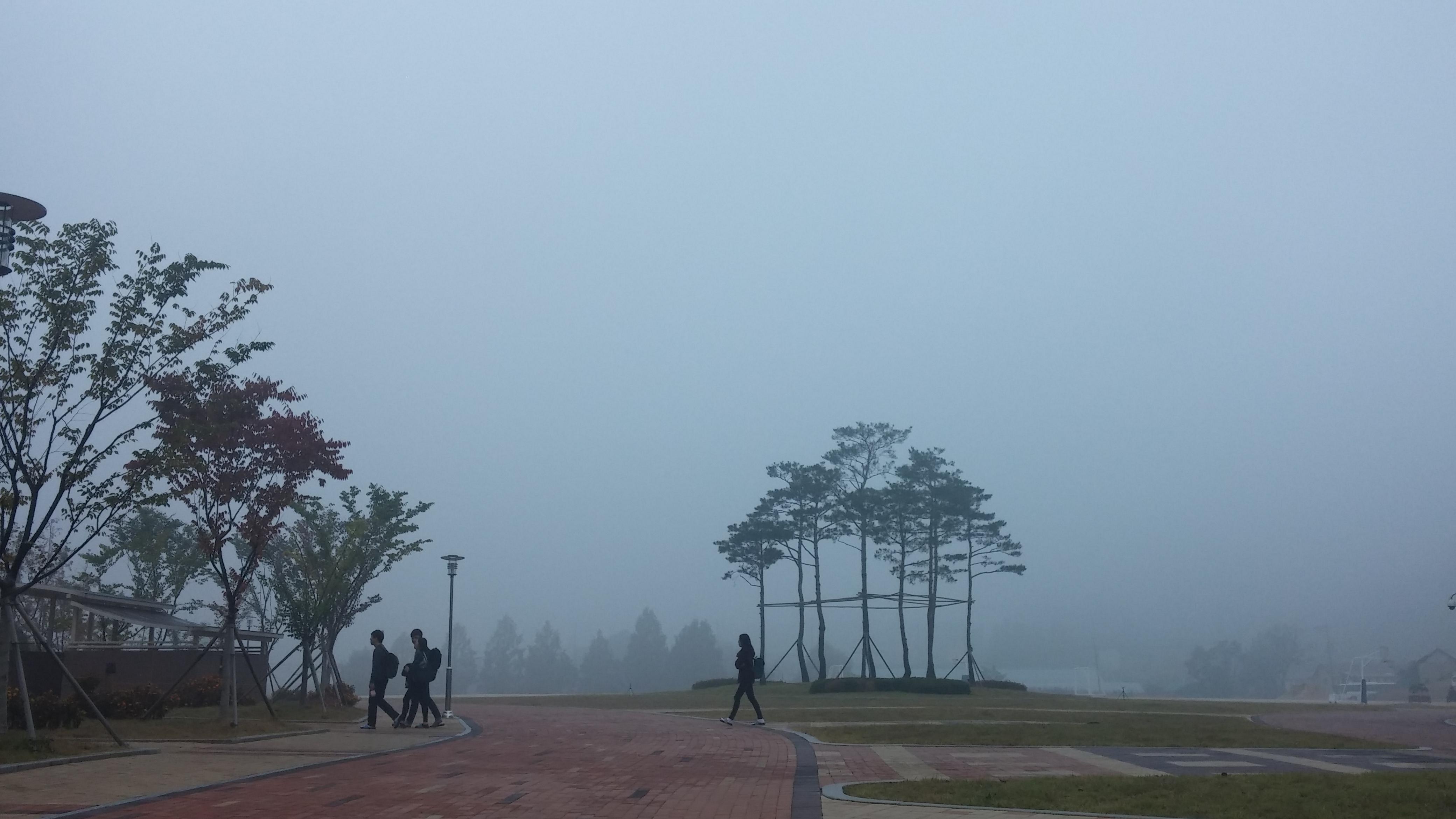 소나무 아홉 그루 - 동국대학교 바이오메디 캠퍼스...