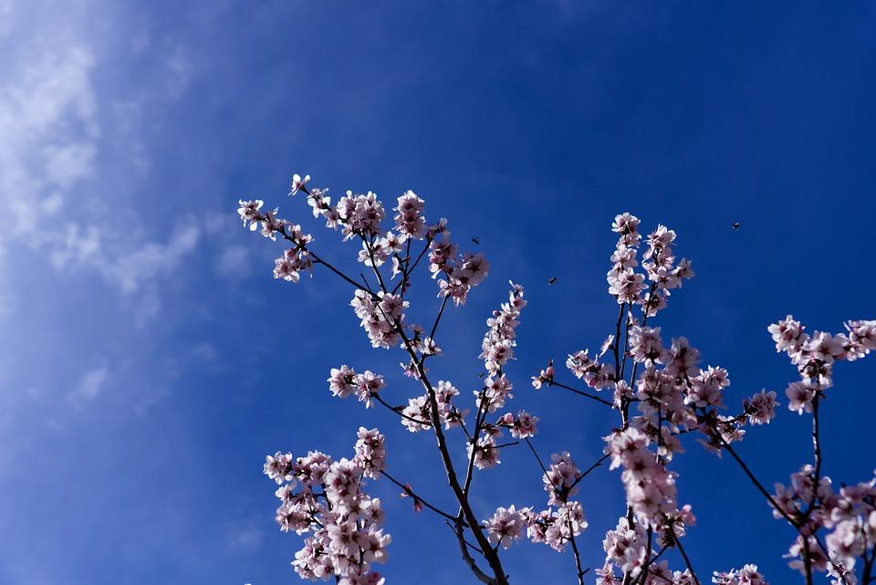 자연의 낭비, 나무의 무절제, 봄의 선물공세 - - ...