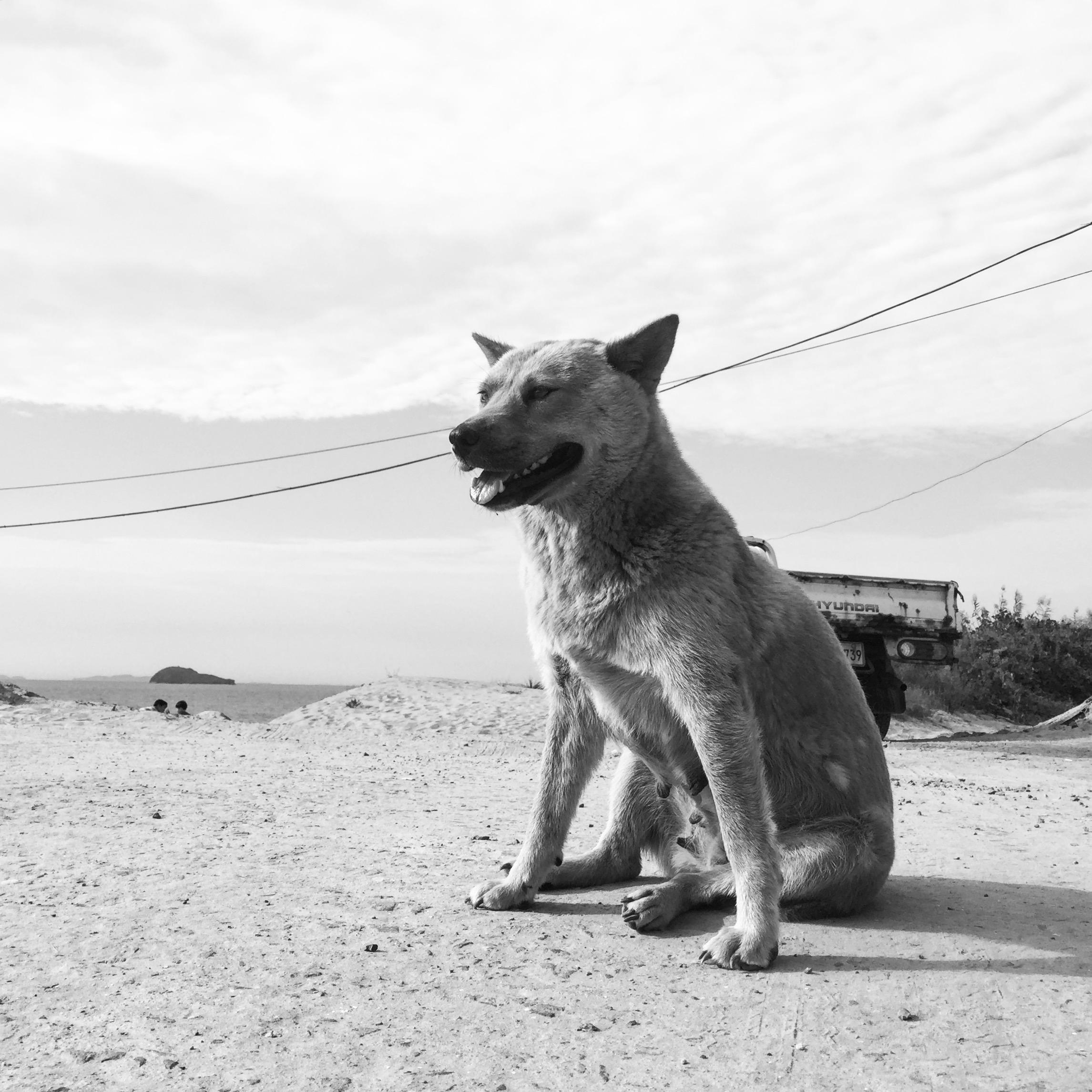 [사진] 풍진 세상 - 2015.09.28 부사방조제