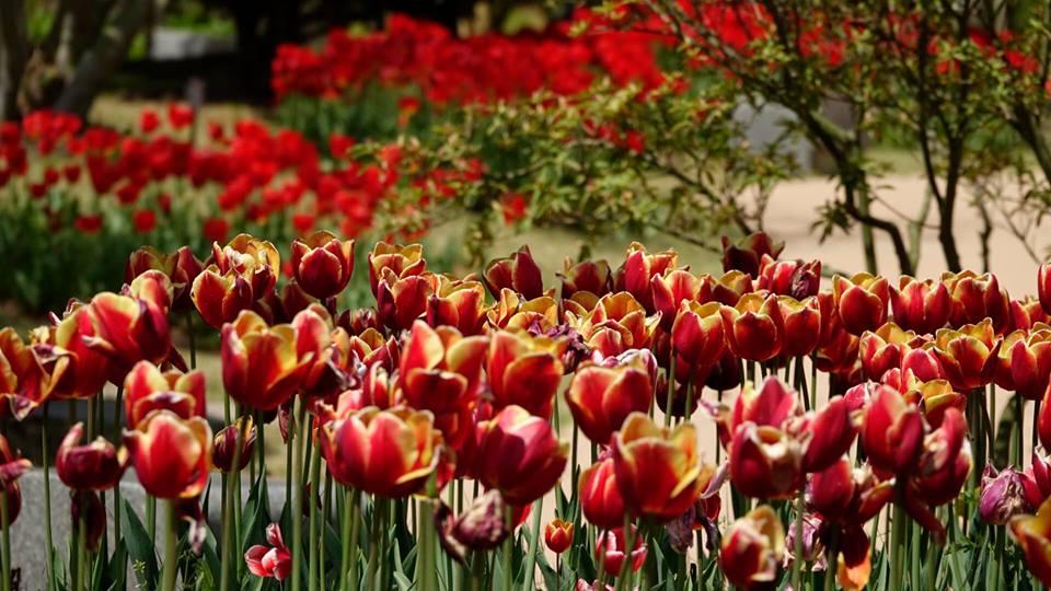 꽃향기로 가득했던 따뜻한 봄 여행 - 순천과 여수