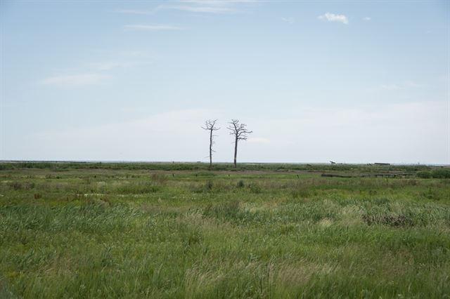 쓰나미 피해가 컸던 미나미소마의 한 지역. 마을이 있던 곳에 지금은 앙상한 나무만 두 그루 덩그러니 서있다. 후쿠시마 사람들은 미야기, 이와테 등 다른 동일본대지진 피해 지역에 비해 복구가 더디다고 말한다. 피에르 엠마뉴엘 델레트헤 프리랜서 기자 pedeletree@gmail.com